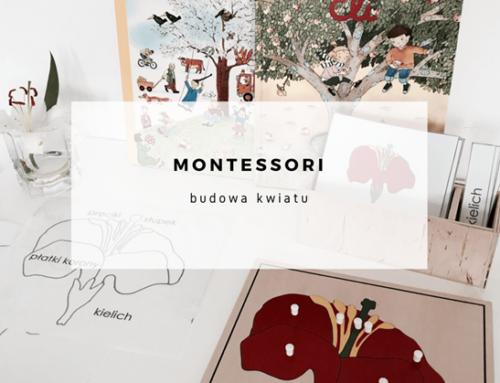 Budowa kwiatu – Montessori