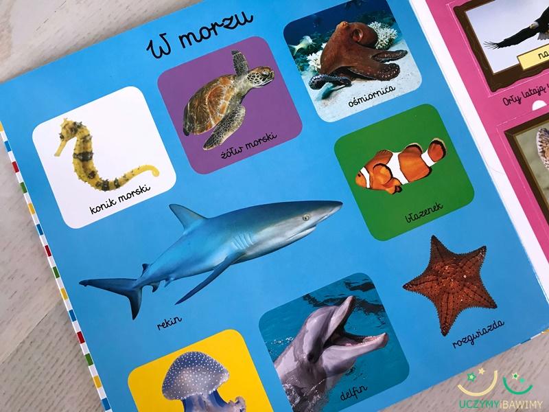 zwierzeta-morskie-ksiazka-dla-dzieci