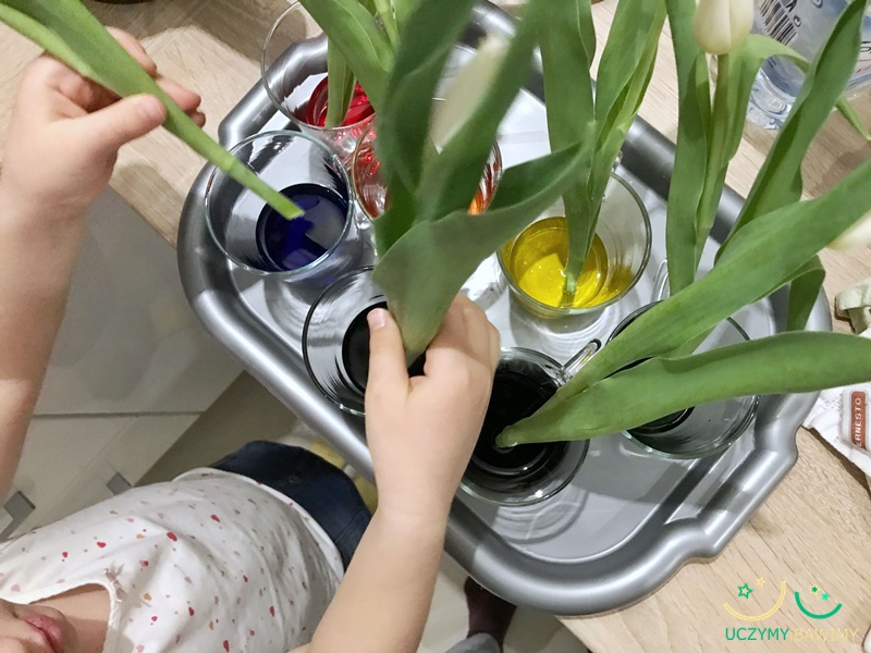 eksperymenty-z-dziecmi