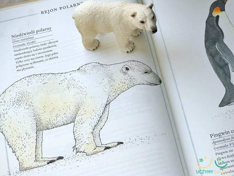 atlas-zwierzat-dla-dzieci