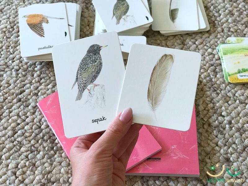 piora-ptakow-obserwacja