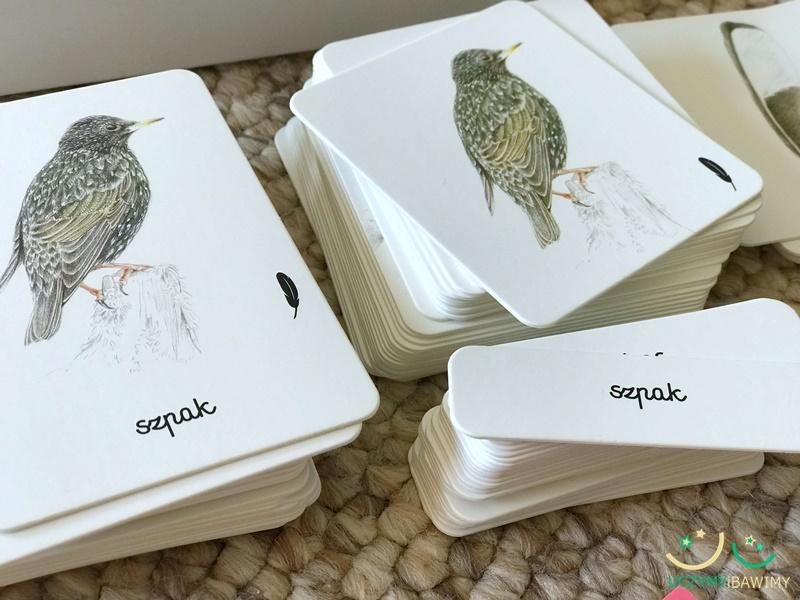 ptaki-karty-edukacyjne