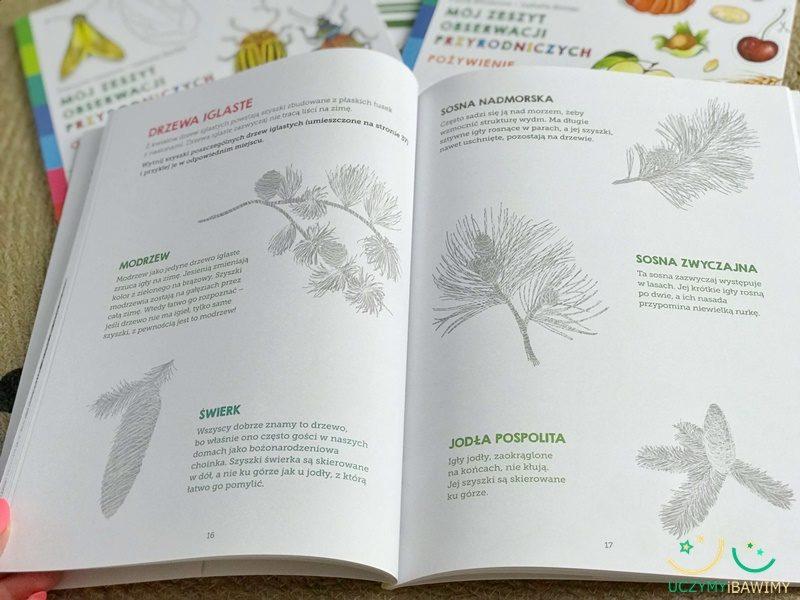 drzewa-iglaste-edukacja