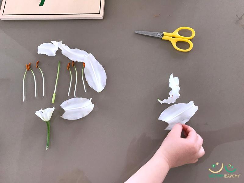 budowa kwiatu