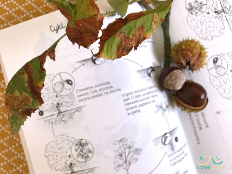 montessori jesień kasztany