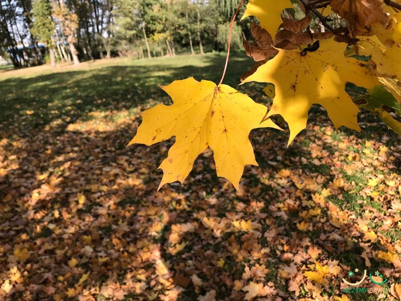 jesien-w-lesie