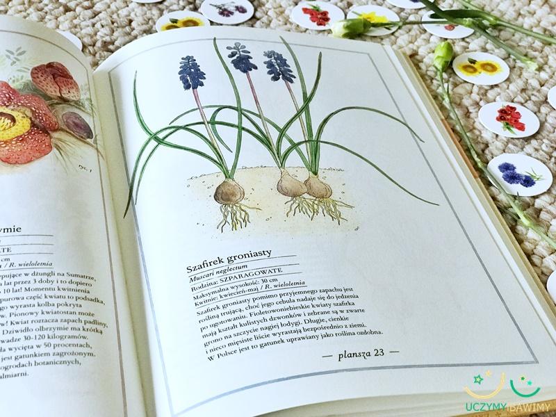atlas-kwiatow-dla-dzieci