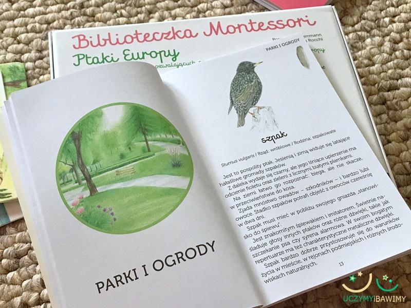 ptaki-montessori