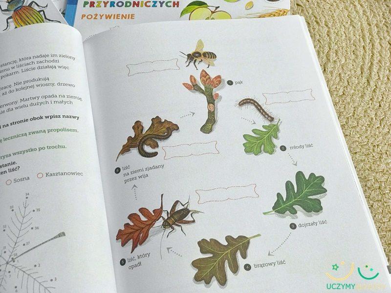liscie-jesien-edukacja