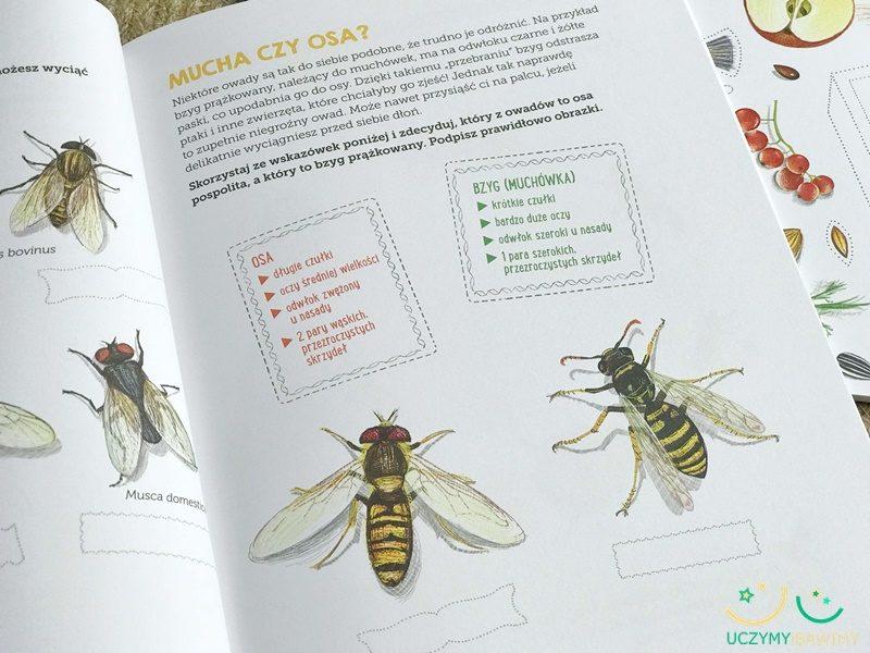 owady-ksiazka-dla-dzieci