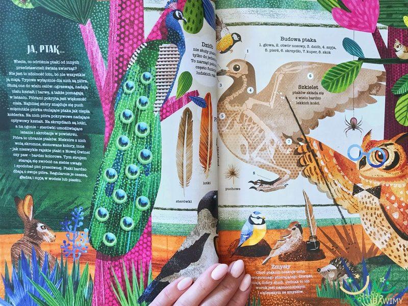 ksiazki-dla-dzieci-ptaki