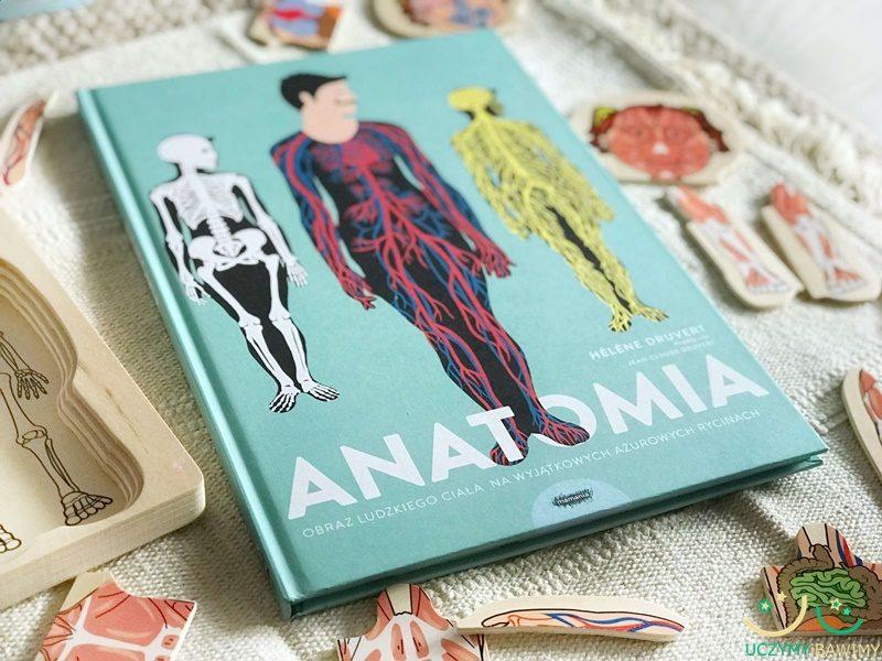 anatomia-mamania