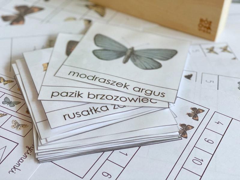 gatunki-motyli-karty-trojdzielne
