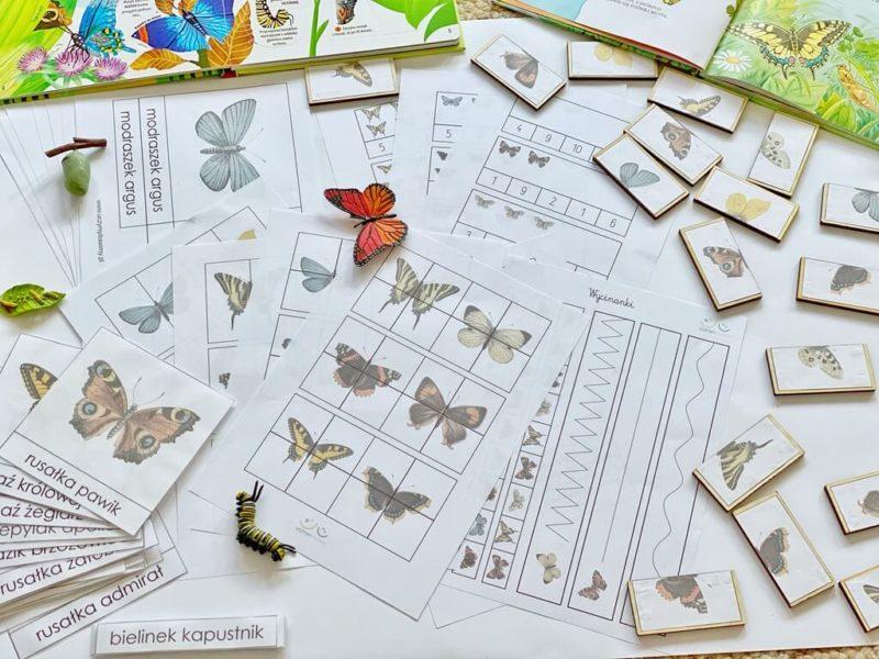 karty-pracy-motyle