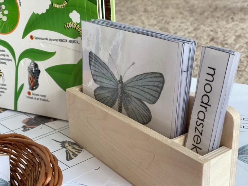 karty-trojdzielne-motyle