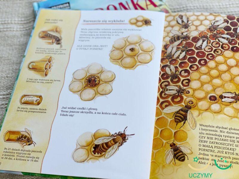 pszczoly-i-ich-niezwykly-swiat