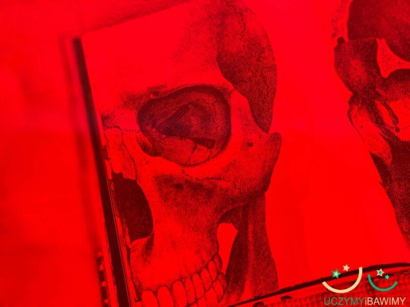 szkielet-czlowieka-ksiazka