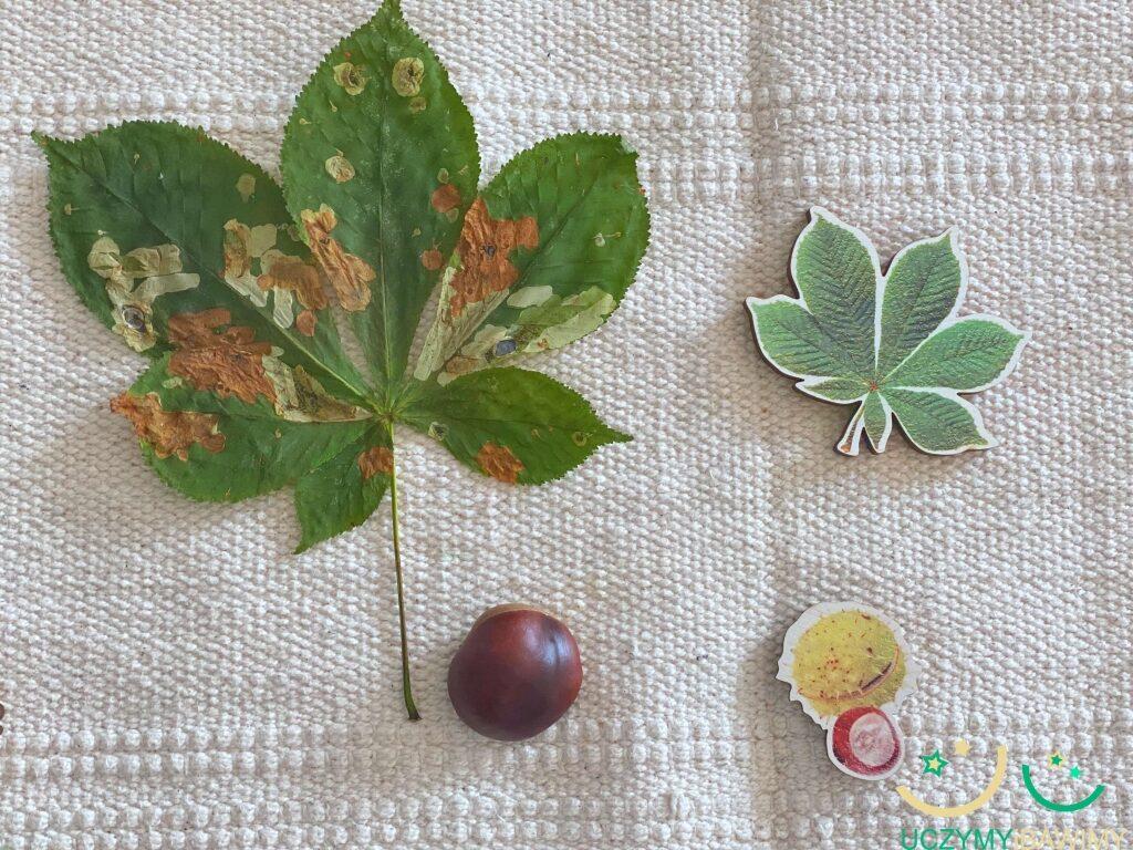 rozpoznawanie-drzew-jesien